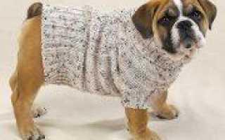 Вязание для собак в мастер-классе