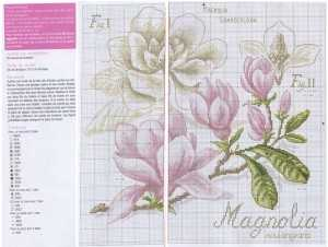 magnoliya_shema